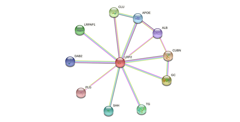 Protein-Protein network diagram for LRP2