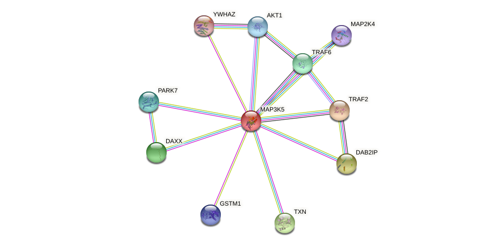 Protein-Protein network diagram for MAP3K5