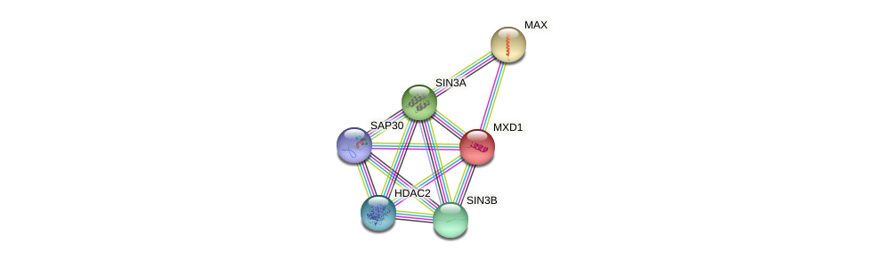 Protein-Protein network diagram for MXD1