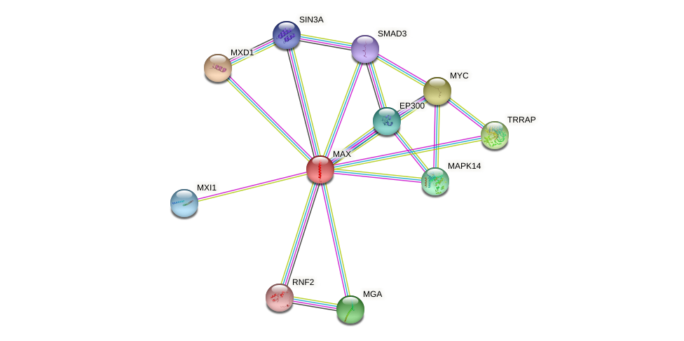 Protein-Protein network diagram for MAX
