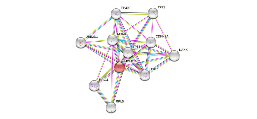 Protein-Protein network diagram for MDM2