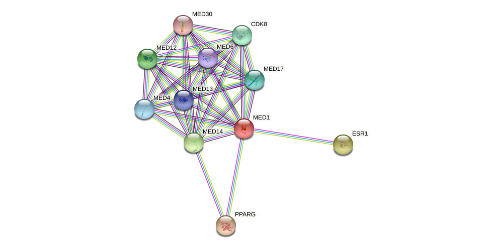 Protein-Protein network diagram for MED1