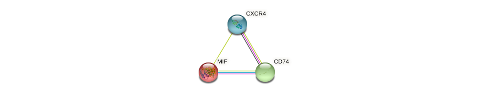 Protein-Protein network diagram for MIF