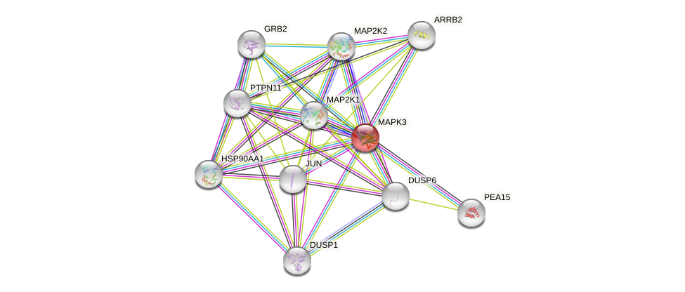 Protein-Protein network diagram for MAPK3