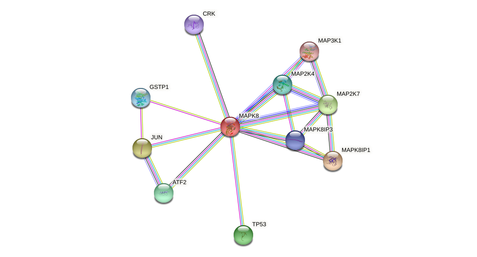Protein-Protein network diagram for MAPK8