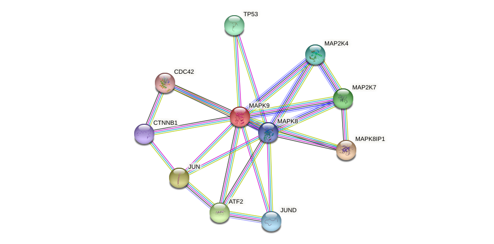 Protein-Protein network diagram for MAPK9