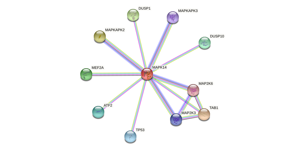 Protein-Protein network diagram for MAPK14