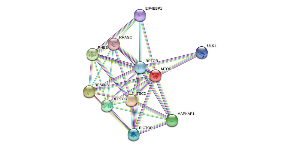 Protein-Protein network diagram for MTOR