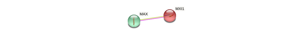Protein-Protein network diagram for MXI1