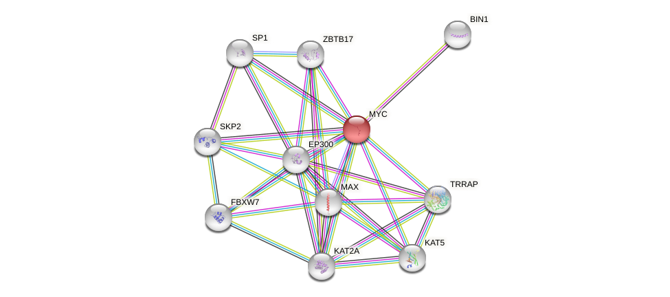 Protein-Protein network diagram for MYC