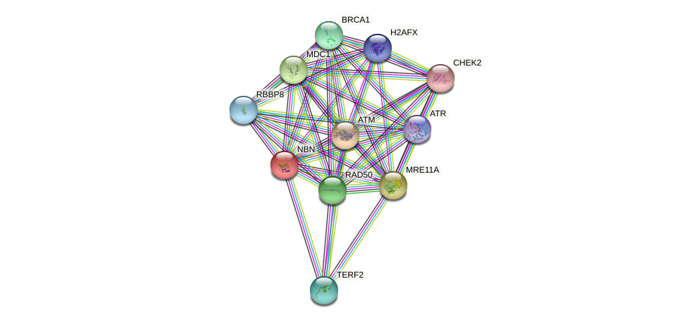 Protein-Protein network diagram for NBN