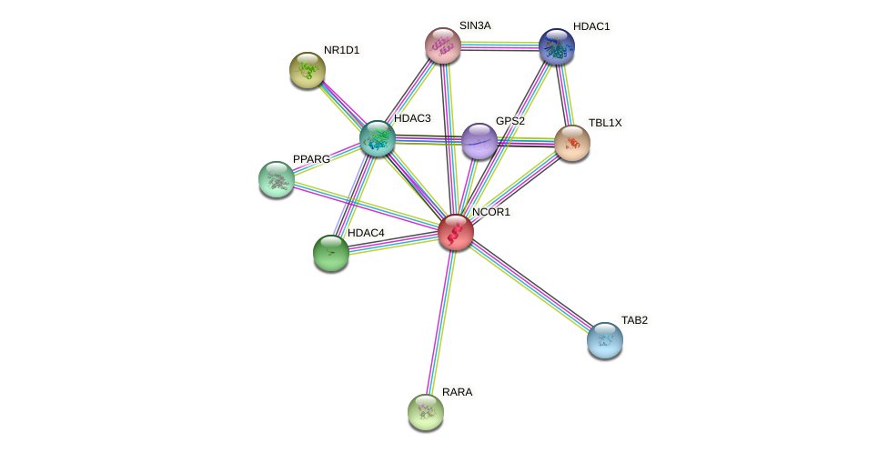 Protein-Protein network diagram for NCOR1