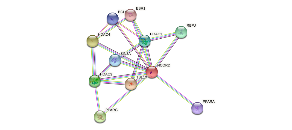 Protein-Protein network diagram for NCOR2