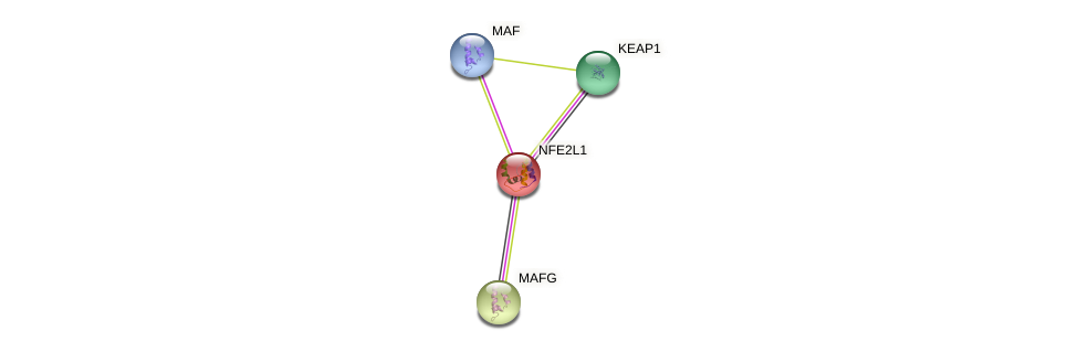 Protein-Protein network diagram for NFE2L1