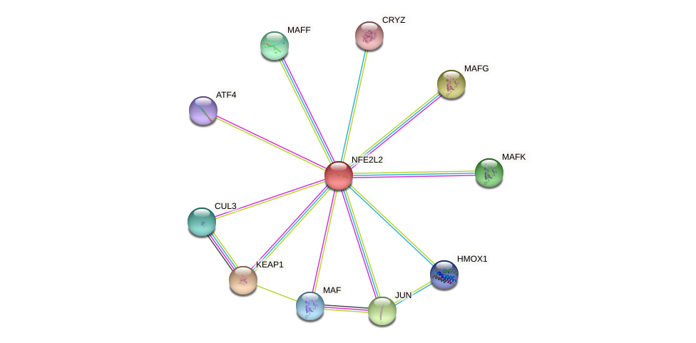 Protein-Protein network diagram for NFE2L2