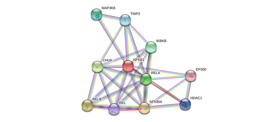 Protein-Protein network diagram for NFKB1