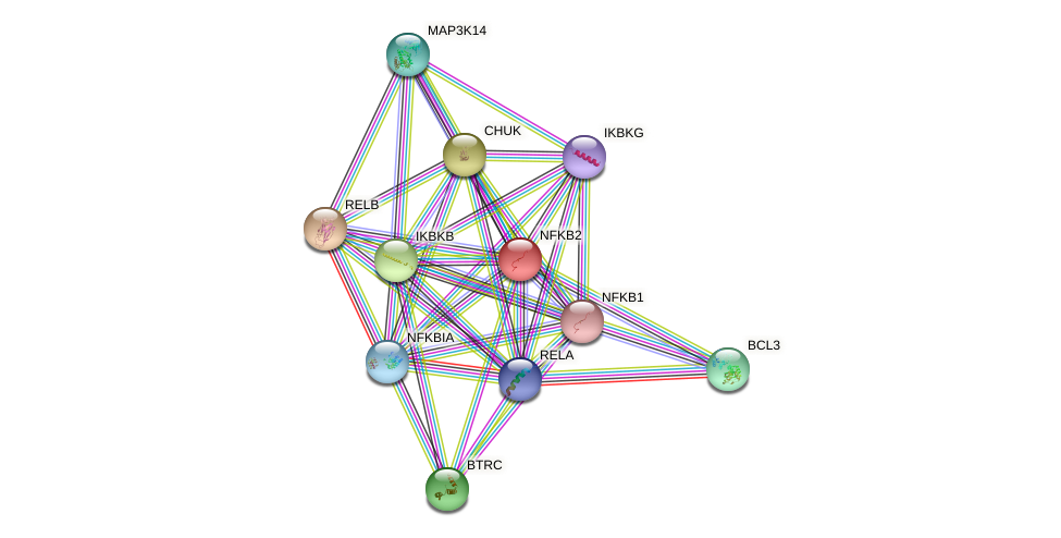 Protein-Protein network diagram for NFKB2