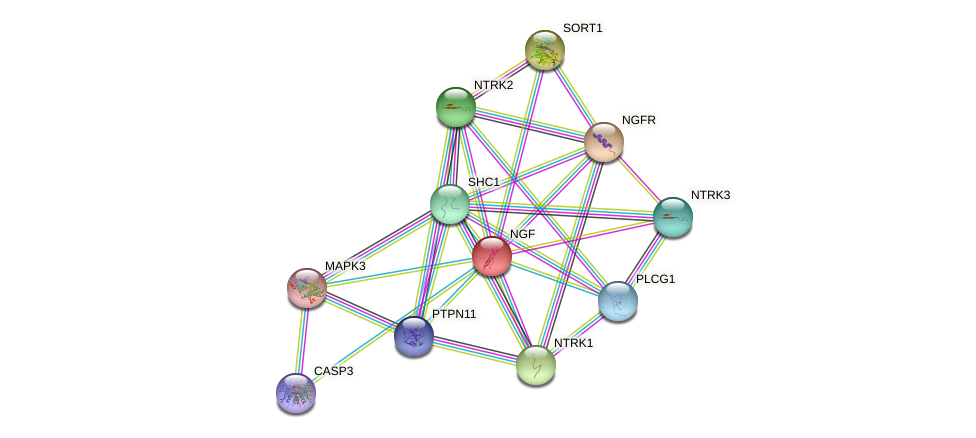Protein-Protein network diagram for NGF