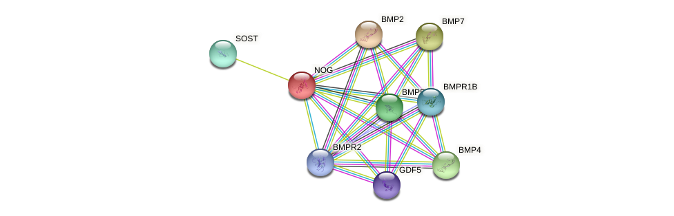 Protein-Protein network diagram for NOG