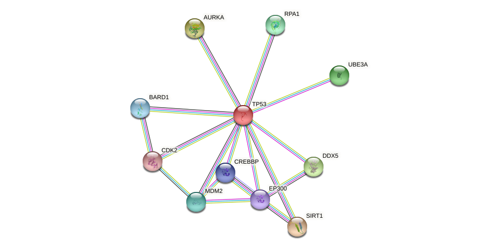 Protein-Protein network diagram for TP53