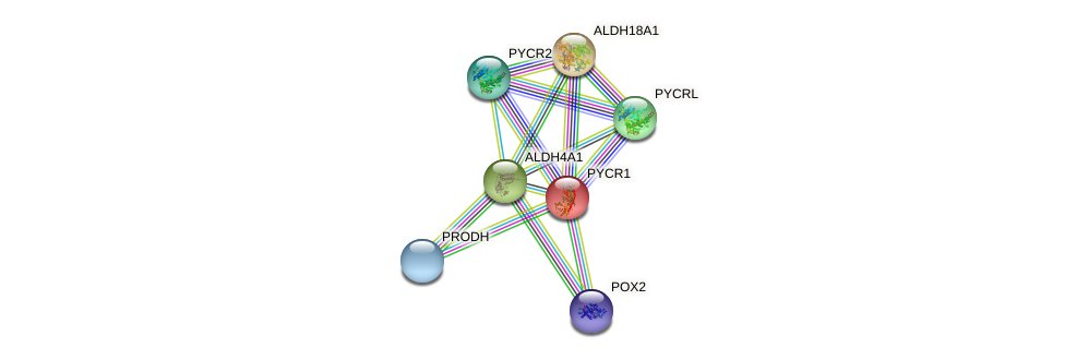 Protein-Protein network diagram for PYCR1