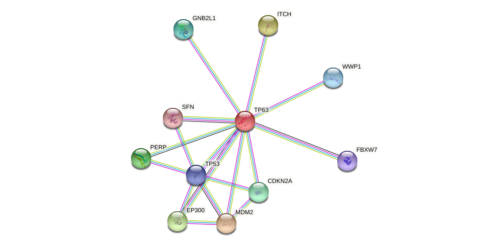 Protein-Protein network diagram for TP63