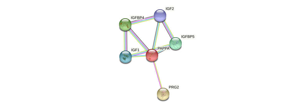 Protein-Protein network diagram for PAPPA