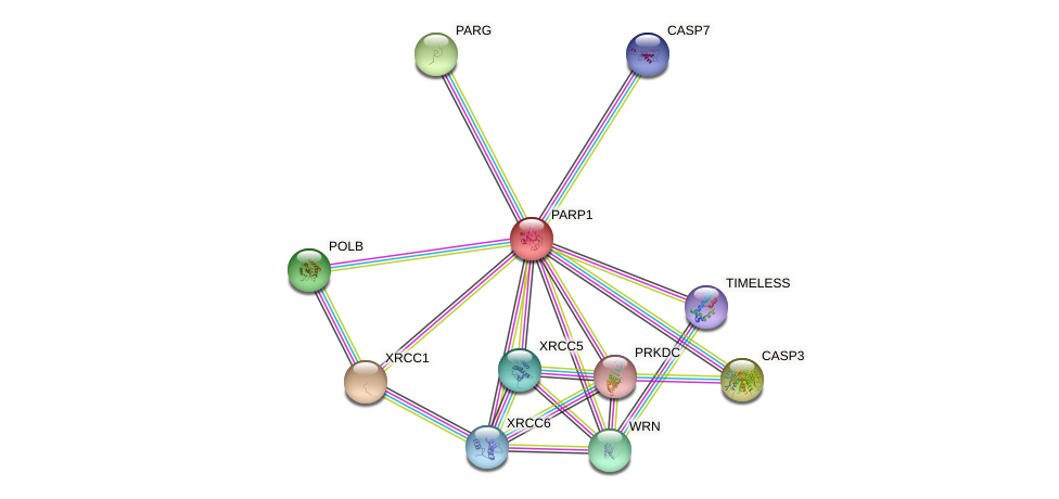Protein-Protein network diagram for PARP1