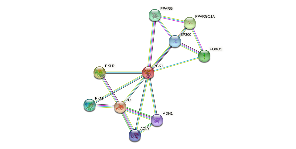 Protein-Protein network diagram for PCK1