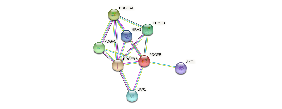 Protein-Protein network diagram for PDGFB