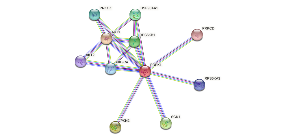 Protein-Protein network diagram for PDPK1
