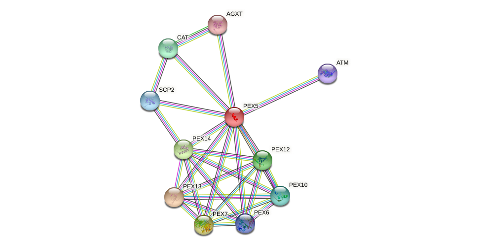 Protein-Protein network diagram for PEX5