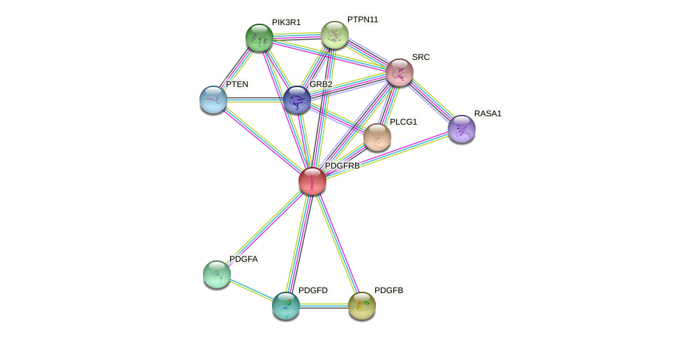 Protein-Protein network diagram for PDGFRB