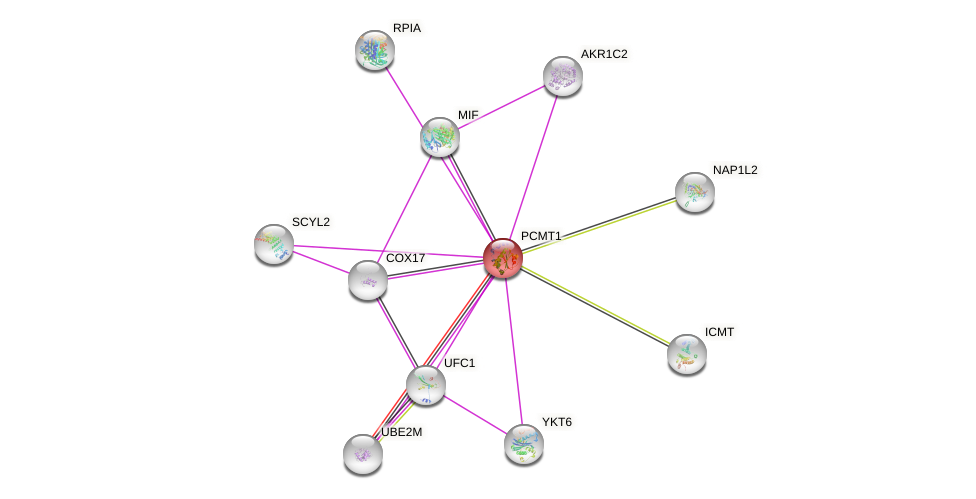 Protein-Protein network diagram for PCMT1