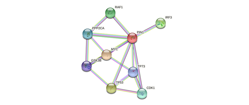 Protein-Protein network diagram for PIN1