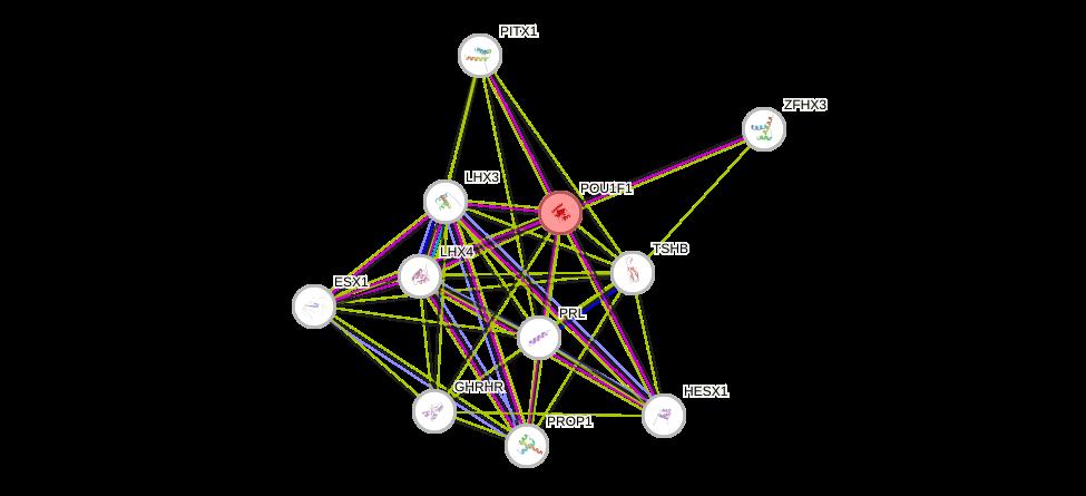 Protein-Protein network diagram for POU1F1
