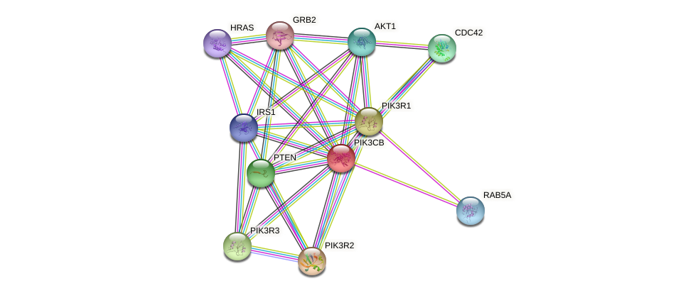 Protein-Protein network diagram for PIK3CB