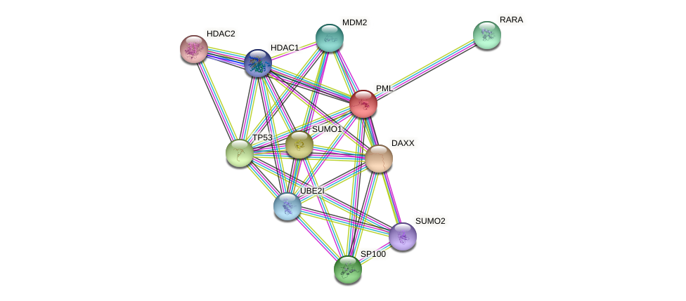 Protein-Protein network diagram for PML