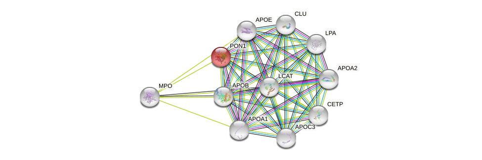 Protein-Protein network diagram for PON1