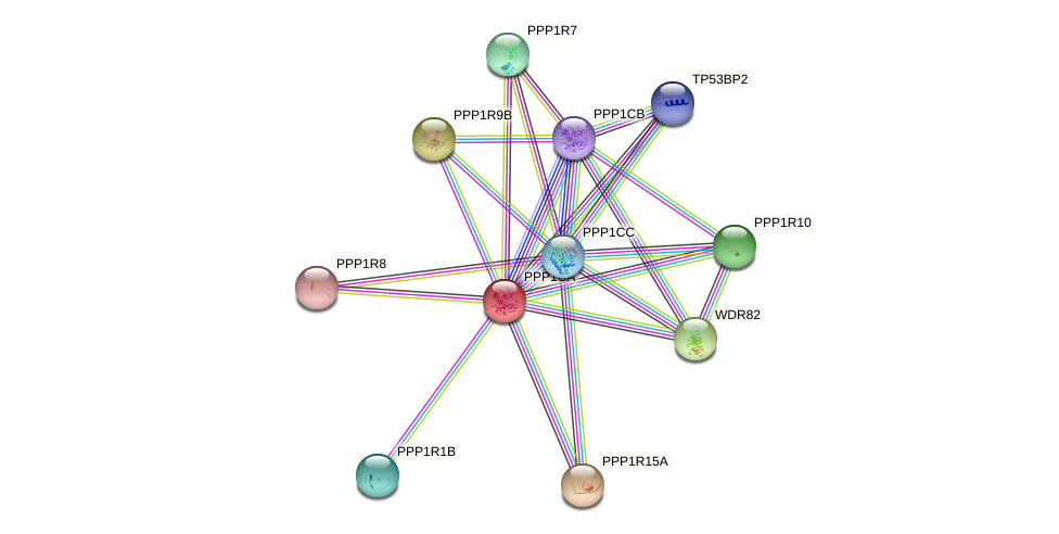 Protein-Protein network diagram for PPP1CA