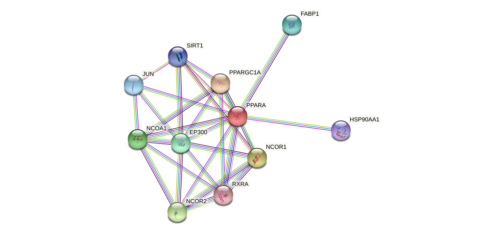 Protein-Protein network diagram for PPARA