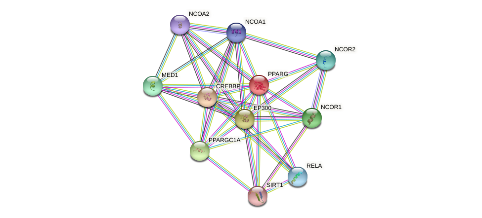 Protein-Protein network diagram for PPARG