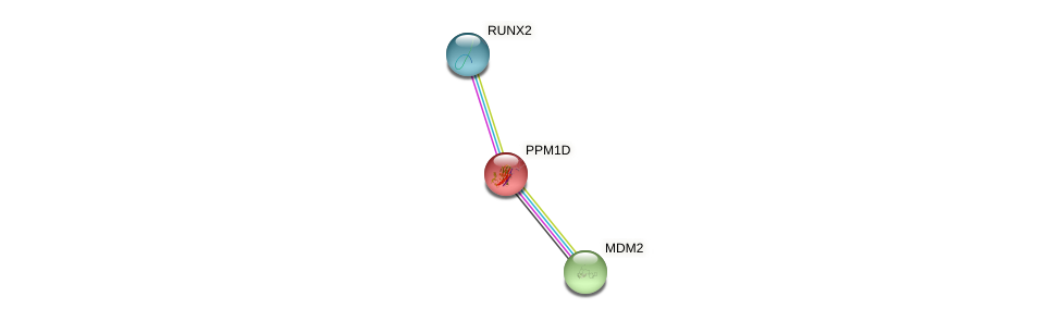 Protein-Protein network diagram for PPM1D
