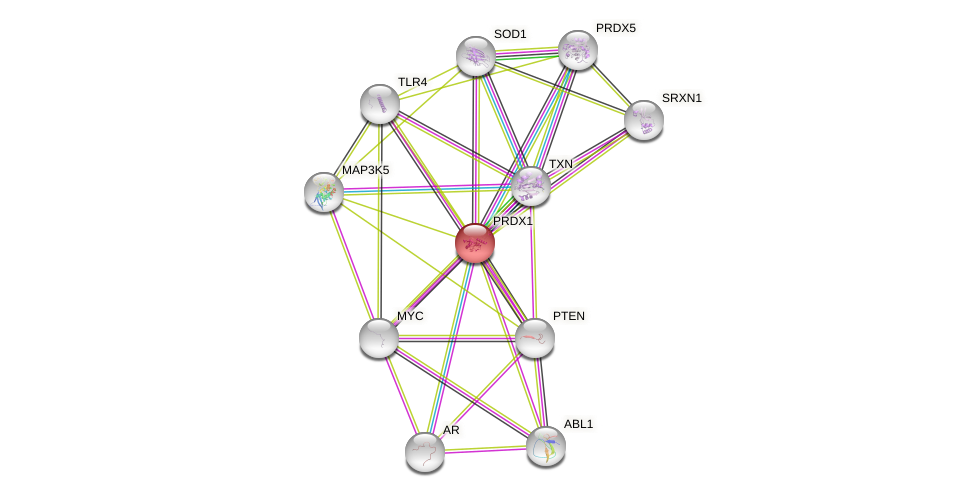 Protein-Protein network diagram for PRDX1