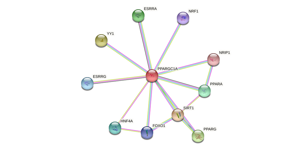 Protein-Protein network diagram for PPARGC1A
