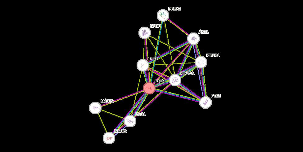 Protein-Protein network diagram for PTEN