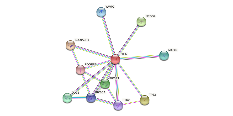 Protein-Protein network diagram for PTEN