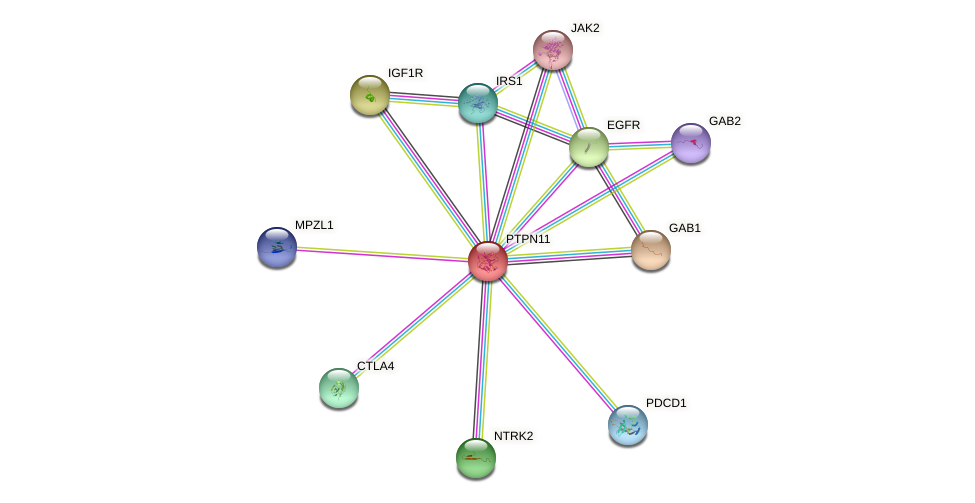 Protein-Protein network diagram for PTPN11