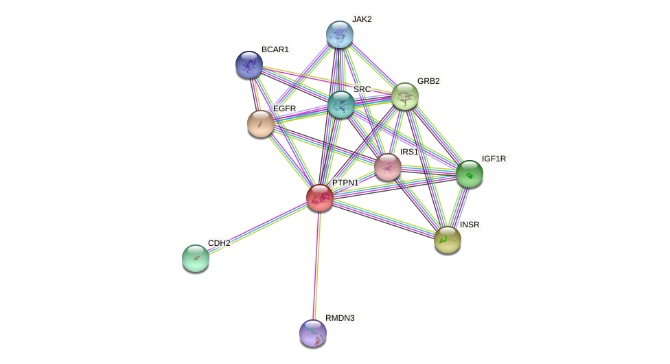 Protein-Protein network diagram for PTPN1