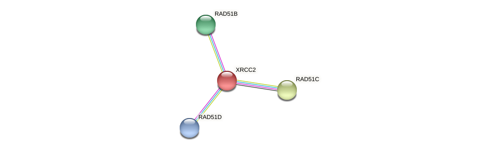 Protein-Protein network diagram for RAD51